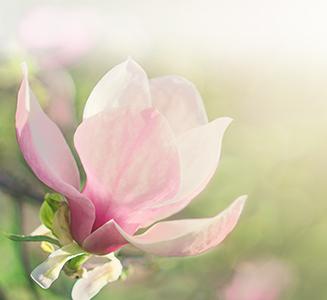 rosa Blume im Grünen