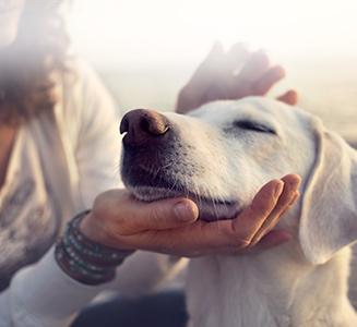 Frau streichelt weißen Hund