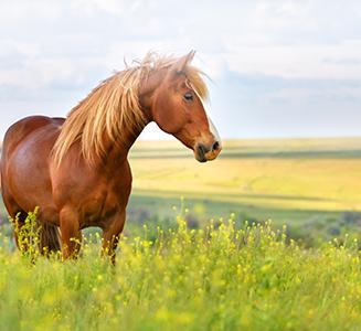 Pferd auf Koppel mit Felderrn im Hintergrund
