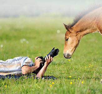 Mann fotografiert Fohlen auf Wiese