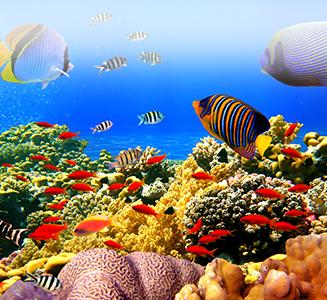Fische im Korallenriff Unterwasser